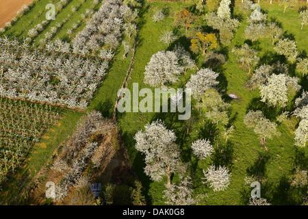 Apple orchard et Cherry Orchard, Belgique