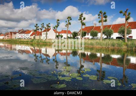 Le saule, l'osier (Salix spec.), Rangée d'arbres le long de la Damse Vaart, Belgique, Flandre occidentale, Damme Banque D'Images