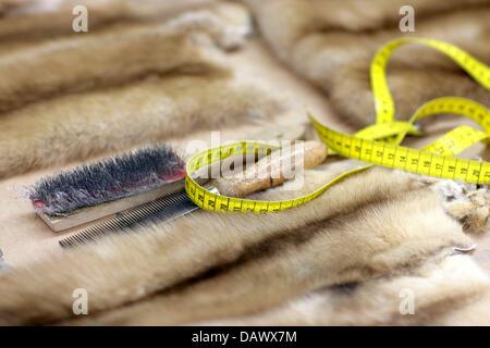 Brosse, peigne et ruban à mesurer, un peltmonger outils du mensonge, sur la fourrure de sable de couleur claire Banque D'Images
