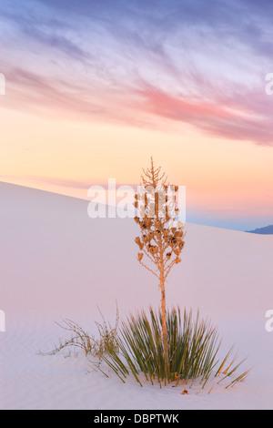 White Sands National Monument, près de Alamagordo, Nouveau Mexique, partie de la désert de Chihuahuan. Banque D'Images