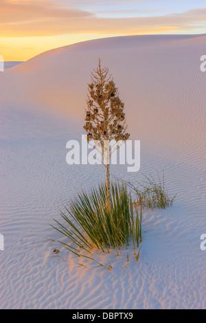 White Sands National Monument, près de Alamagordo, Nouveau Mexique, partie de la désert de Chihuahuan.