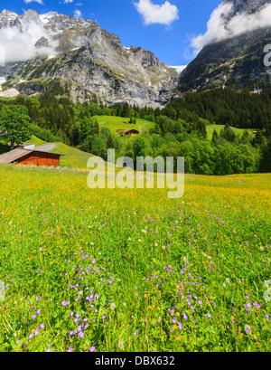 Fleurs de Printemps près de Grindelwald, Oberland Bernois, Suisse Banque D'Images