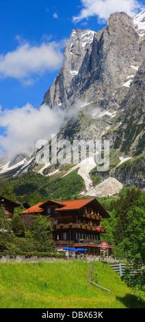 Fleurs de Printemps près de Grindelwald, Oberland Bernois, Suisse. Banque D'Images
