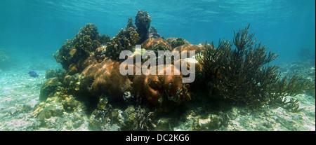 Panorama sous-marine dans la santé des récifs de corail Banque D'Images