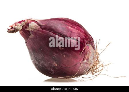 Bulbe d'oignon rouge Banque D'Images