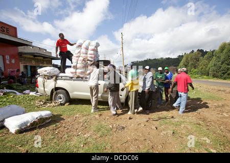 Chargement de balles hommes hat sur une camionnette pour le transport à Nairobi et au-delà. Maua, Région Meru, Kenya. Banque D'Images