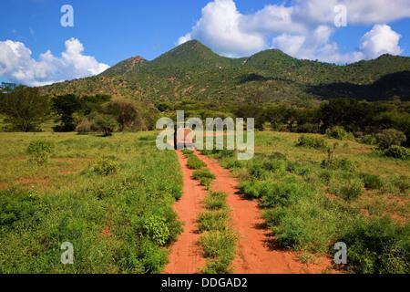 En voiture sur un chemin de terre à travers le parc national de Tsavo Ouest, le Kenya, l'Afrique en safari Banque D'Images