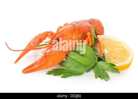 La langouste et le citron isolé sur fond blanc Banque D'Images