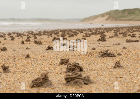 Ou lugworm sandworm (Arenicola marina) castings sur la plage de Northumberland, Angleterre, Royaume-Uni, Europe