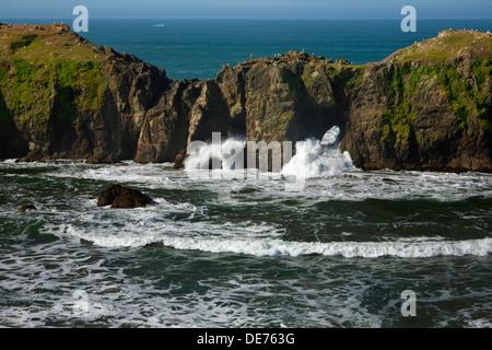Ou01162-00...OREGON - vagues se briser à travers les arches naturelles dans la région de Elephant Rock off Point Banque D'Images