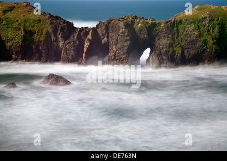 Ou01163-00...OREGON - arches naturelles dans la région de Elephant Rock off Point Coquille dans Bandon sur la côte Banque D'Images