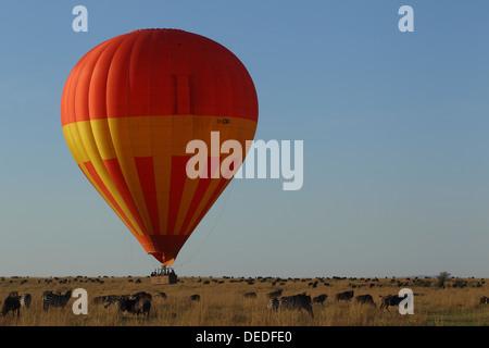 Hot Air Balloon Safari dans le Masai Mara, Kenya, Afrique Banque D'Images