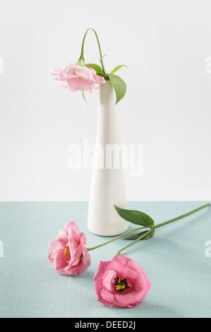 Eustoma rose en vase blanc