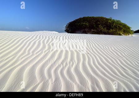 Désert des Lençóis Maranhenses, Lençóis Maranhenses, barreirinhas, Maranhão, Brésil Banque D'Images