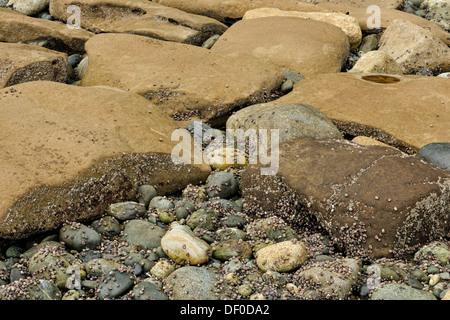 Des rochers de grès côtiers sculpté par l'action des marées sur la rive du détroit de Juan de Fuca SOOKE, BC Banque D'Images