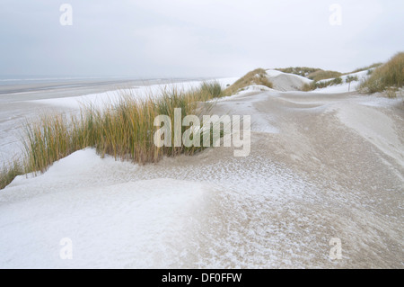 En hiver, les Dunes Langeoog, îles de la Frise orientale, Frise orientale, Basse-Saxe, Allemagne Banque D'Images
