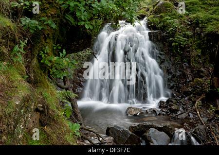 Chutes d'eau Tom Gill Beck chute d'eau près de Tarn Hows en été Lake District National Park Cumbria Angleterre Royaume-Uni GB Grande-Bretagne