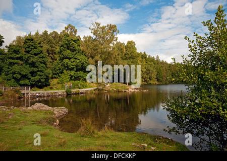 Promeneurs touristes visiteurs marchant à Tarn Hows en été Lake District National Park Cumbria Angleterre Royaume-Uni GB Grande-Bretagne