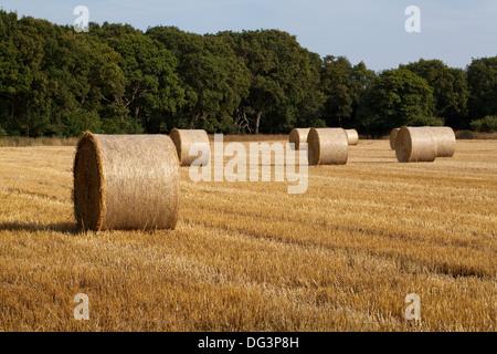 Round, net lié et enveloppé de bottes de paille, à gauche sur chaume après la récolte de céréales se sont réunis à. Ingham, Norfolk.