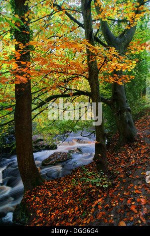 UK,South Yorkshire,Sheffield Rivelin Valley,Cascades & Woodland Banque D'Images