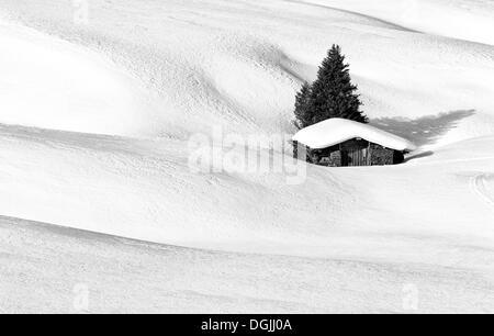 Image en noir et blanc d'un paysage d'hiver avec une cabane en bois et d'un conifère, Alpe di Siusi, Dolomites, Banque D'Images