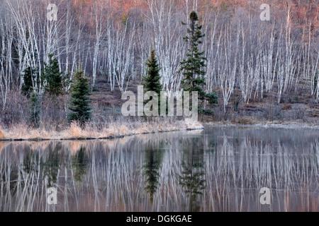 Beaverpond au début du printemps à l'aube du Grand Sudbury Ontario Canada Banque D'Images