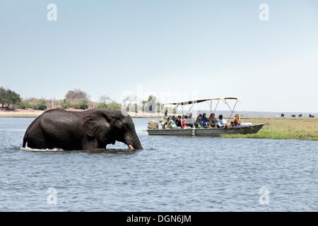Les touristes sur une Afrique safari regarder un éléphant traversant la rivière Chobe National Park, Botswana, Africa Banque D'Images