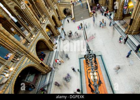 Grande salle du Musée d'Histoire Naturelle de Londres Banque D'Images