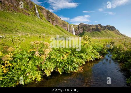Cascade de Seljalandsfoss, Sud de l'Islande, Islande, Europe Banque D'Images