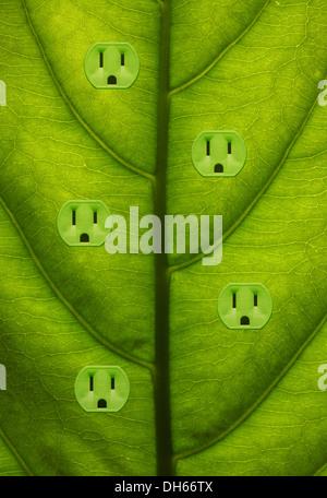 Close-up d'une plante verte avec des feuilles de couleur vert cinq prises électriques ajouté. Banque D'Images