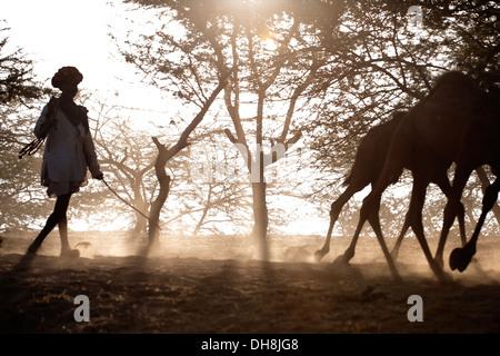 Éleveur de chameaux avec des chameaux vers le chameau de Pushkar Fair Banque D'Images