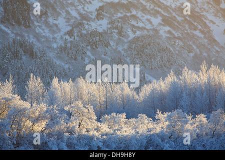 L'hiver dans la Chugach National Forest, de l'Alaska. Banque D'Images