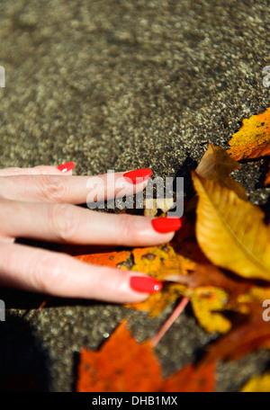La main d'un ladiy avec ongles rouge holding autumn leaves Banque D'Images