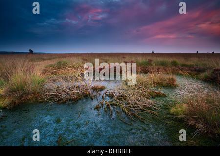 Plus de coucher de soleil spectaculaire marais sauvages avec des arbres morts, Fochteloerveen, Drenthe, Pays-Bas Banque D'Images
