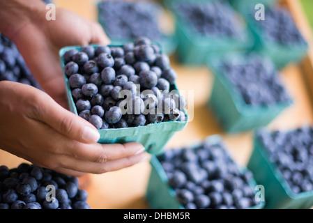 Les fruits biologiques affichés sur un support ferme. Des bleuets dans des barquettes. Banque D'Images