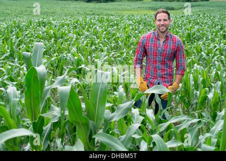 Un homme debout dans un champ de maïs, sur une ferme biologique. Banque D'Images