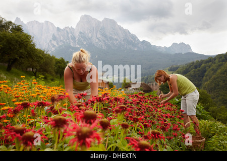 Women Picking Flowers Banque D'Images