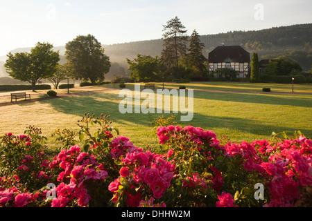 Roses dans les jardins du château, Haemelschenburg Emmerthal, Weser Hills au nord, Basse-Saxe, Allemagne, Europe