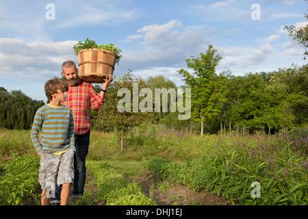 Homme mature et fils avec panier de feuilles sur Herb Farm Banque D'Images