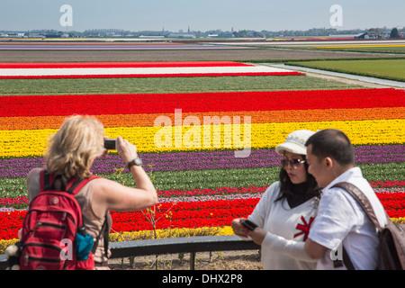 Pays-bas, lisse, champs de tulipes. Portrait de jardins de Keukenhof. La prise de photos Banque D'Images