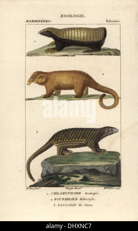 Pink Fairy armadillo, Chlamyphorus truncatus, Cyclopes didactylus anteater, soyeux, et pangolin Sunda, Manis javanica. Banque D'Images