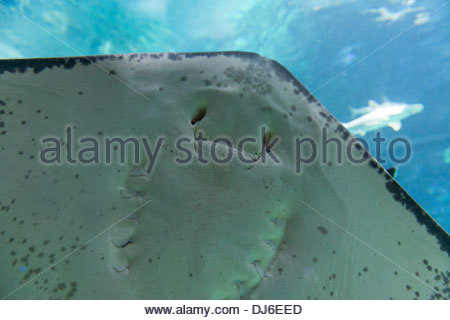 Des images ou photos de la sous-marins ou paradis naturel sous-marin Banque D'Images