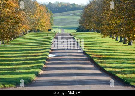 Avenue de l'arbre en automne casting shadows sur chaque côté de longue allée dans country park Banque D'Images