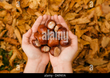 Close up of female hands in autumn park holding conkers
