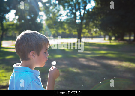 Boy blowing dandelion clock Banque D'Images