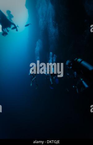 Les plongeurs d'explorer face à des murs de la caverne Trou Bleu que le poisson nage par sur les récifs coralliens en mer des Caraïbes