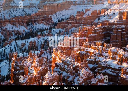 Les cheminées dans l'Amphithéâtre de Bryce Canyon en hiver à l'aube, Utah, USA