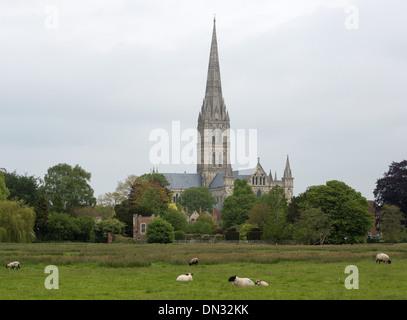 GV de la cathédrale de Salisbury, Wiltshire. 29 Mai 2013 Banque D'Images