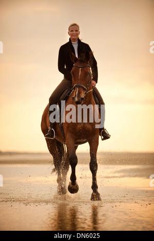 Femme sur un cheval hongre hanovrien, le port d'une bride, au galop, dans la lumière du soir, sur la plage de Borkum Banque D'Images