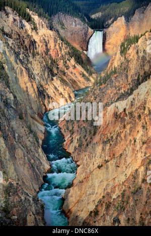 Pointe d'un arc-en-ciel sous les chutes supérieures et la rivière Yellowstone vu de Artist Point dans le Parc National Banque D'Images